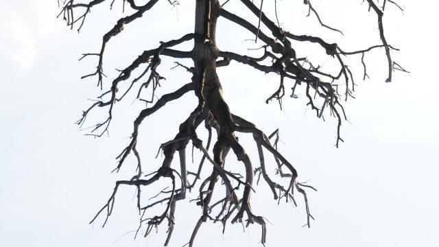 複雑に枝分かれしている木の枝の写真