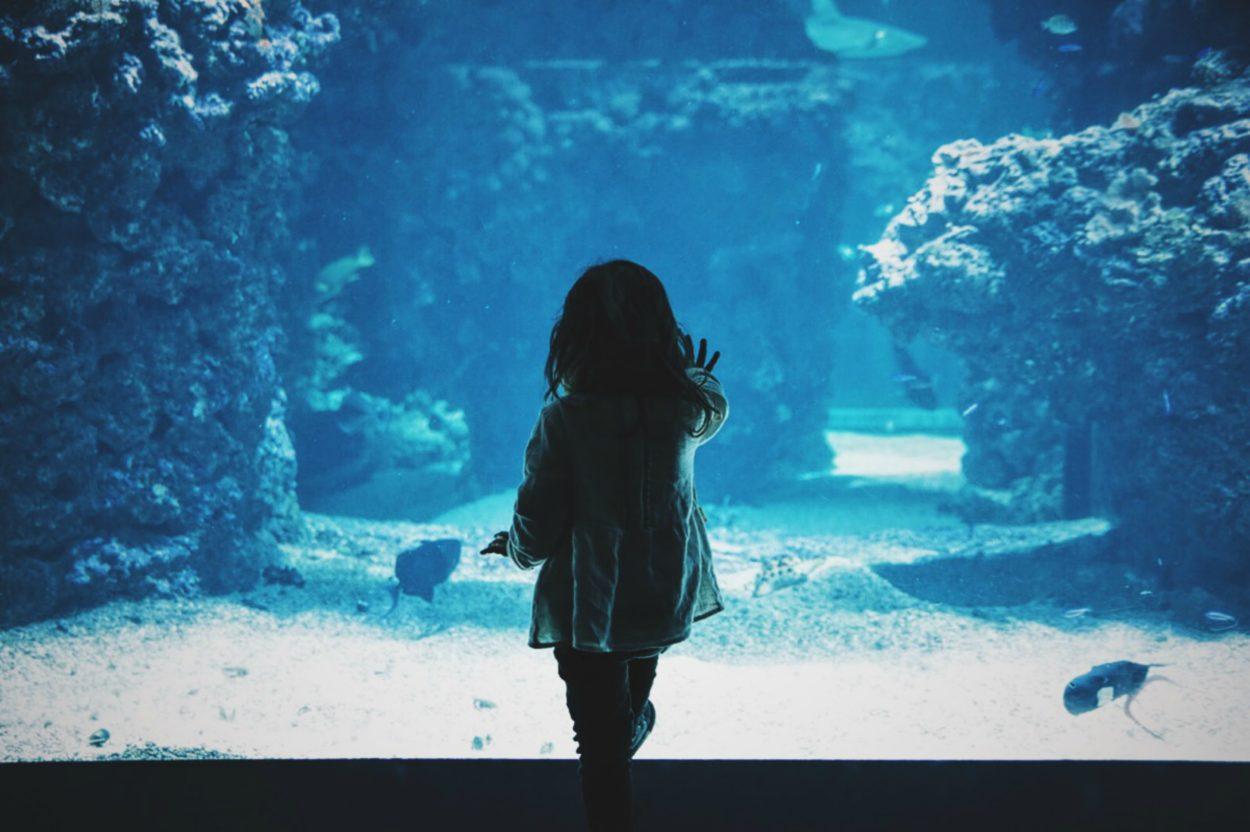 巨大な水槽を夢中で眺めている少女の後ろ姿
