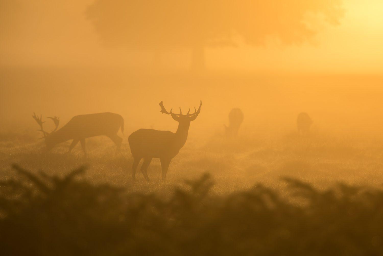 群れの周りの気配を警戒する草食動物